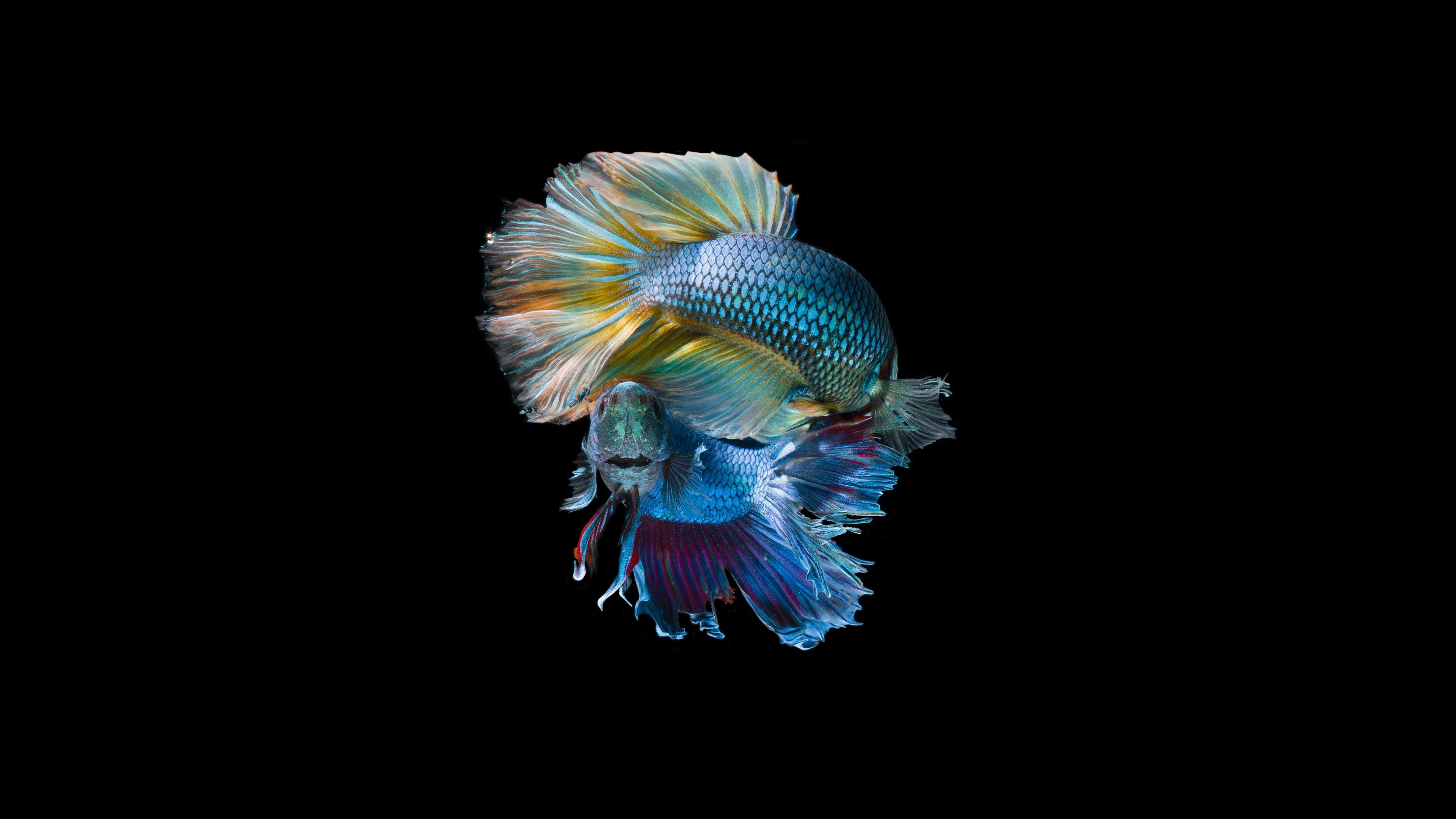 fishes fish glitter tail squama 4k 1542242152 - fishes, fish, glitter, tail, squama 4k - Glitter, Fishes, Fish