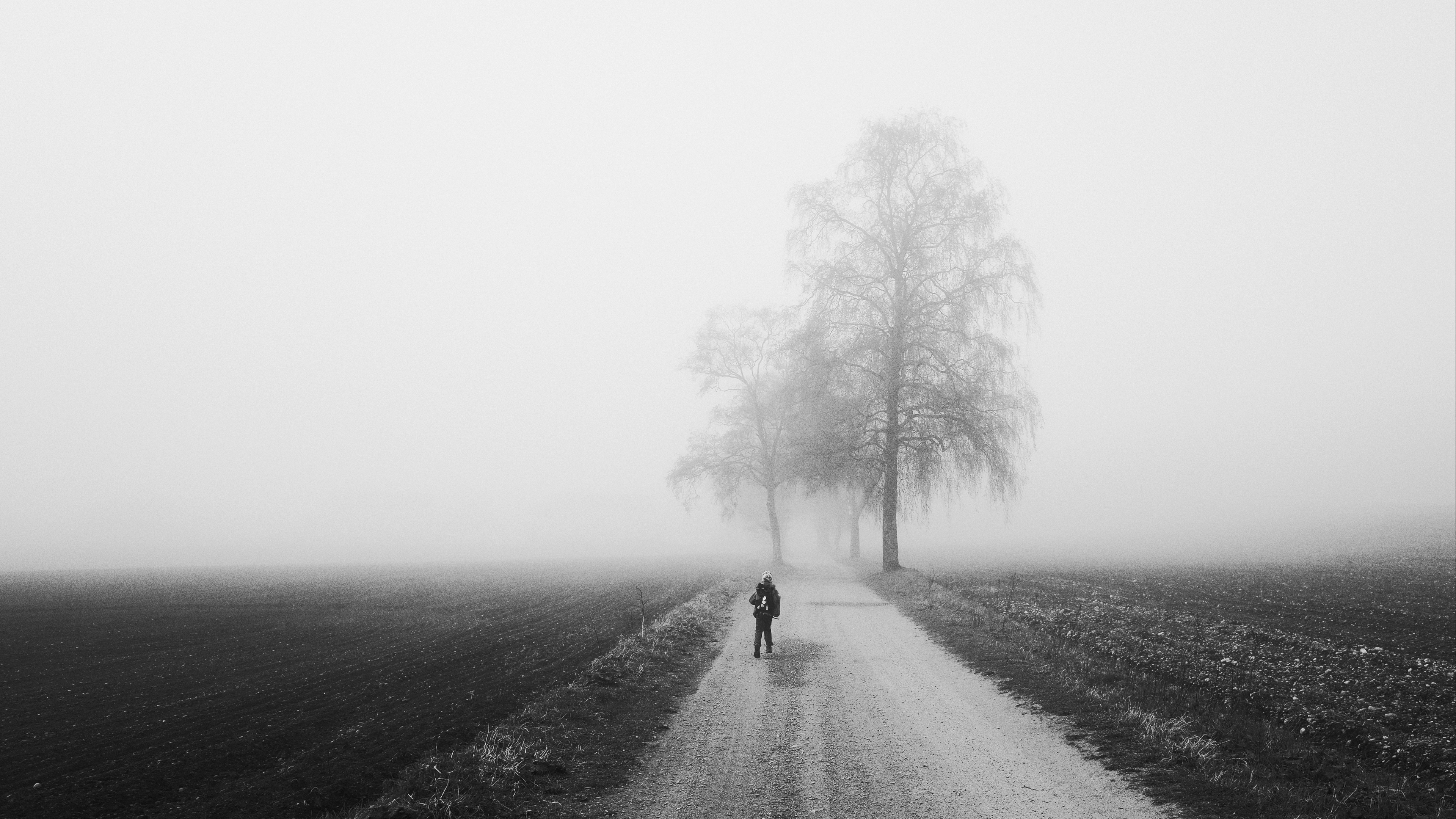 fog alone bw silhouette road trees 4k 1541117192 - fog, alone, bw, silhouette, road, trees 4k - fog, bw, Alone