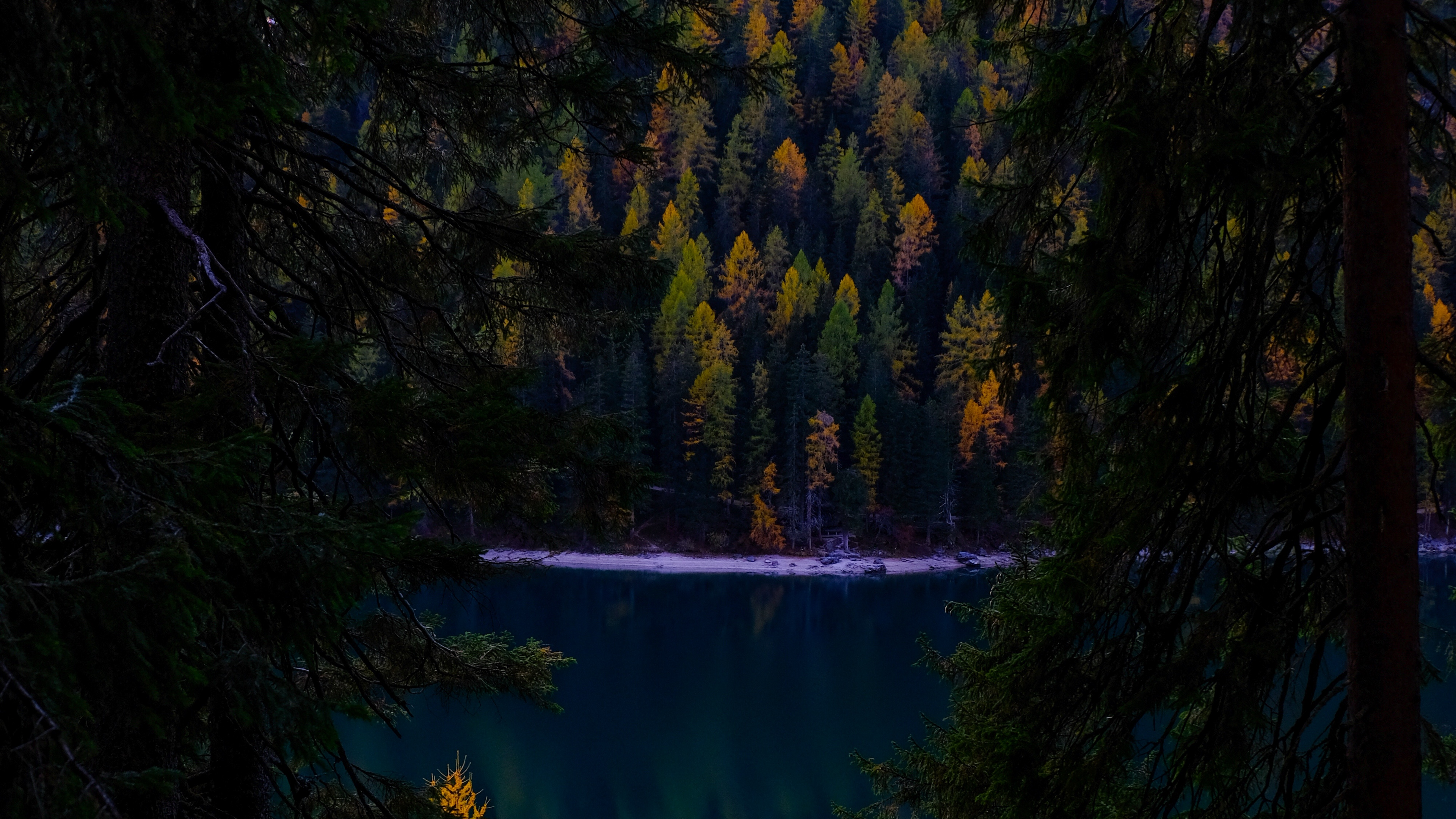 forest autumn lake branches dark 4k 1541113725 - forest, autumn, lake, branches, dark 4k - Lake, Forest, Autumn