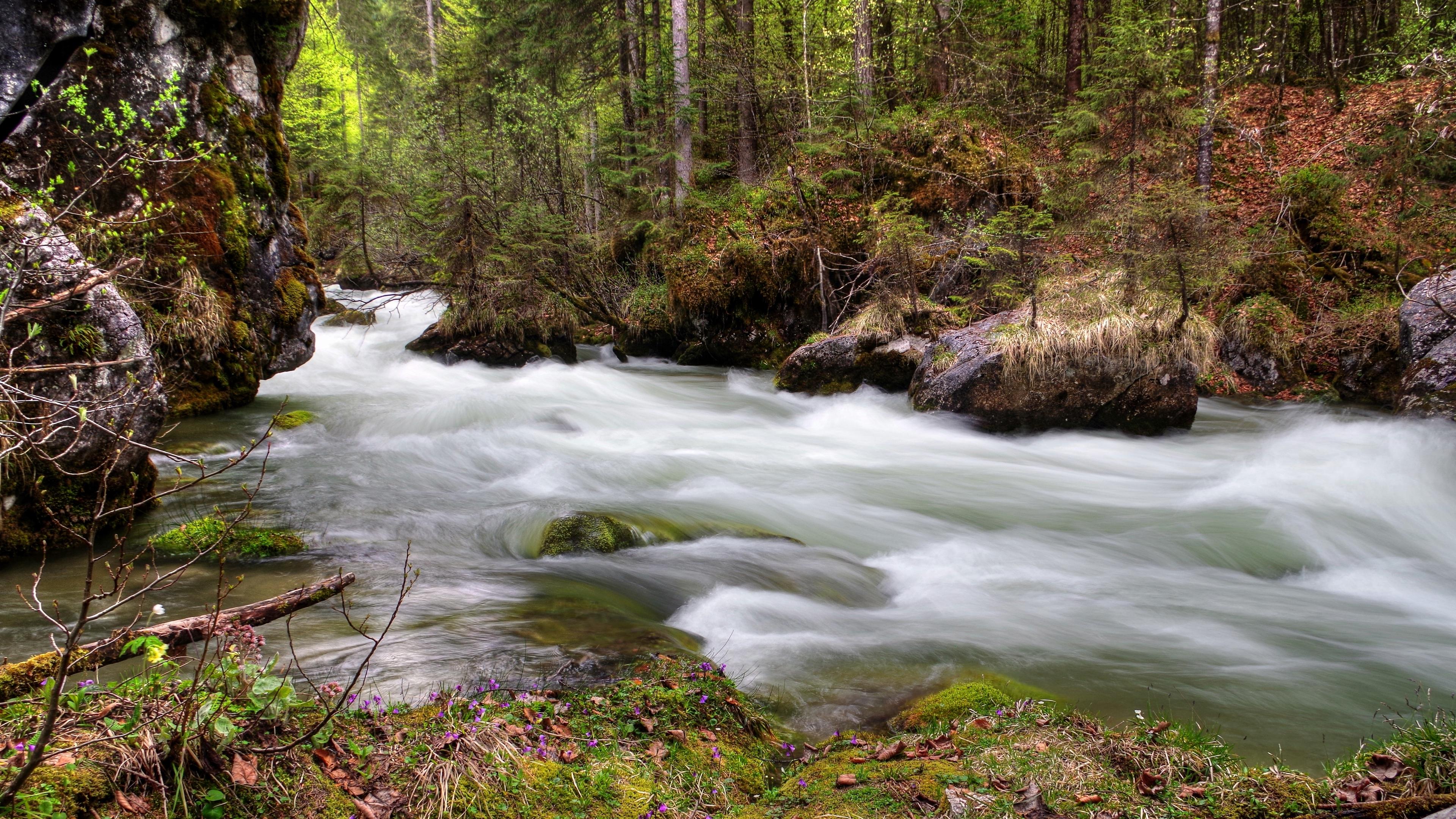 forest river flow nature 4k 1541114444 - forest, river, flow, nature 4k - River, Forest, Flow