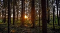 forest sunlight trees rays sunset 4k 1541117272 200x110 - forest, sunlight, trees, rays, sunset 4k - Trees, Sunlight, Forest