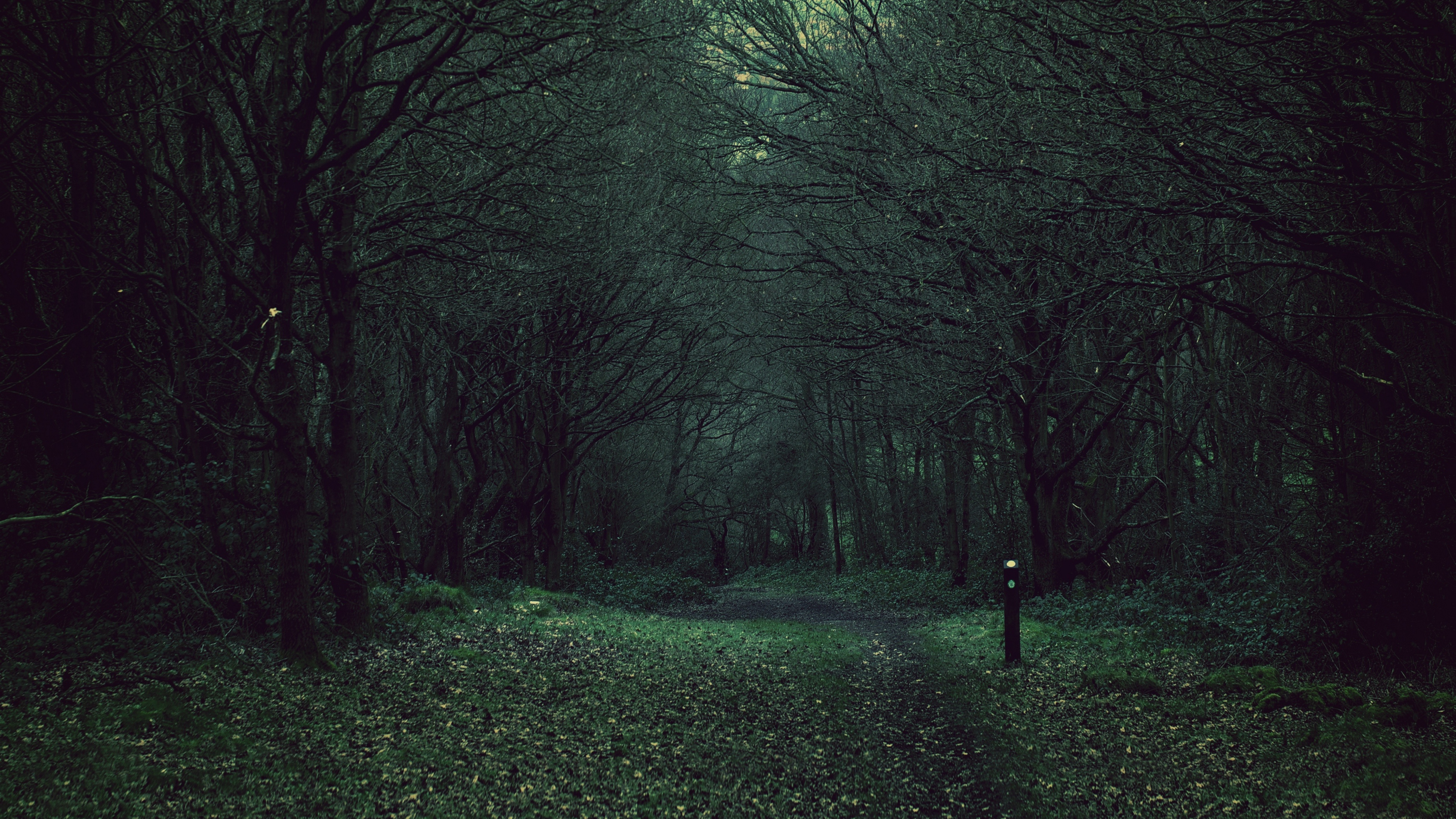 forest trees gloomy foliage fallen 4k 1541117905 - forest, trees, gloomy, foliage, fallen 4k - Trees, gloomy, Forest