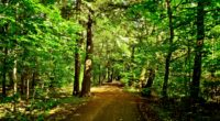 forest trees road nature 4k 1541114008 200x110 - forest, trees, road, nature 4k - Trees, Road, Forest