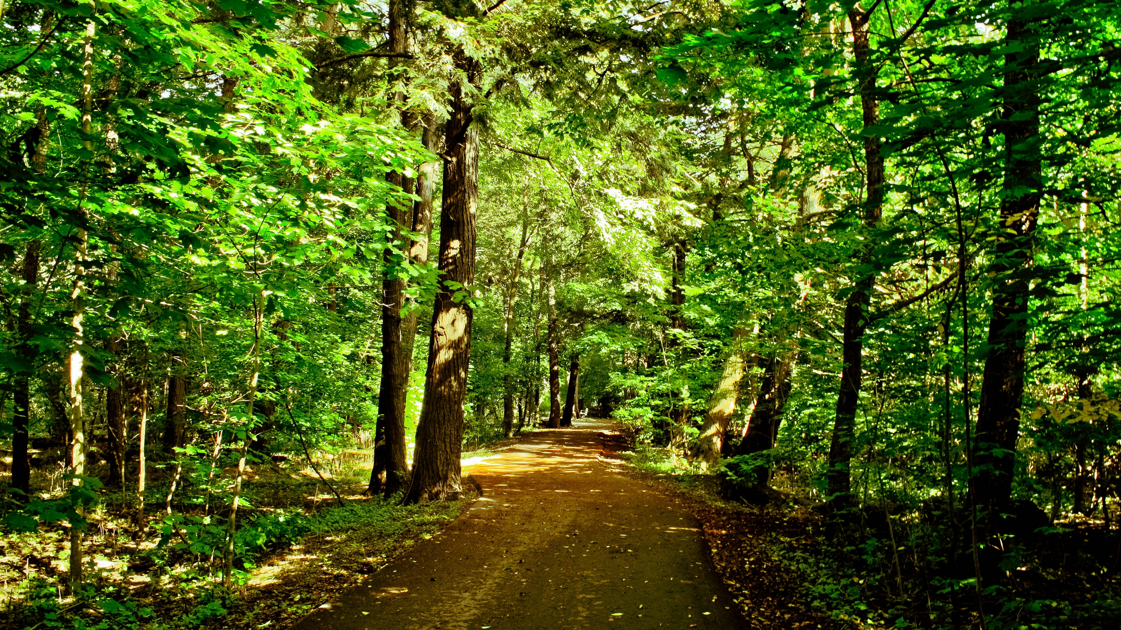 forest trees road nature 4k 1541114008 - forest, trees, road, nature 4k - Trees, Road, Forest