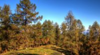 forest trees spruce nature 4k 1541114430 200x110 - forest, trees, spruce, nature 4k - Trees, spruce, Forest