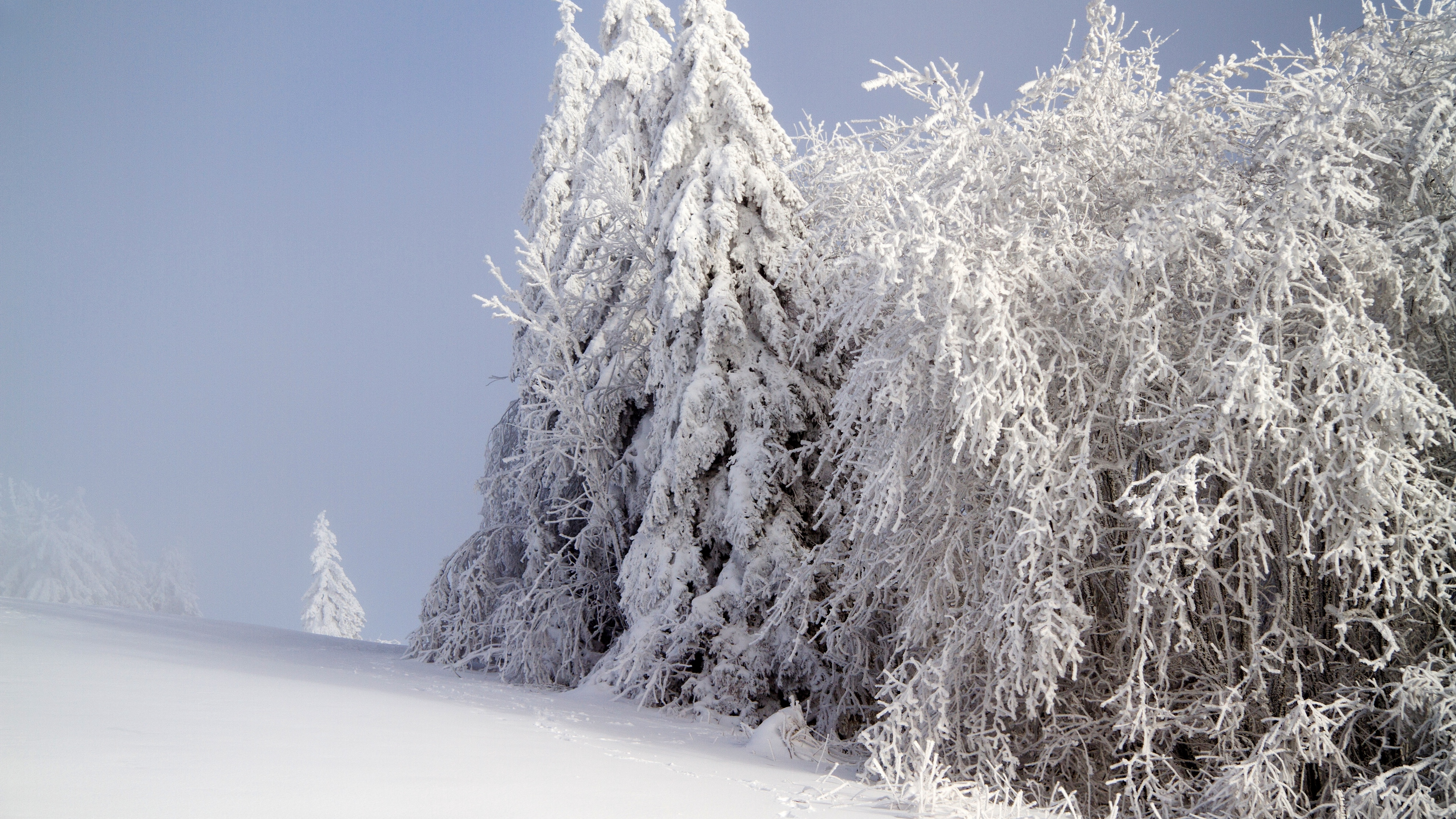 forest winter snow 4k 1541114490 - forest, winter, snow 4k - Winter, Snow, Forest