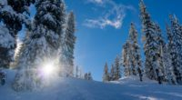 forest winter snow trees sunlight elevation 4k 1541117311 200x110 - forest, winter, snow, trees, sunlight, elevation 4k - Winter, Snow, Forest