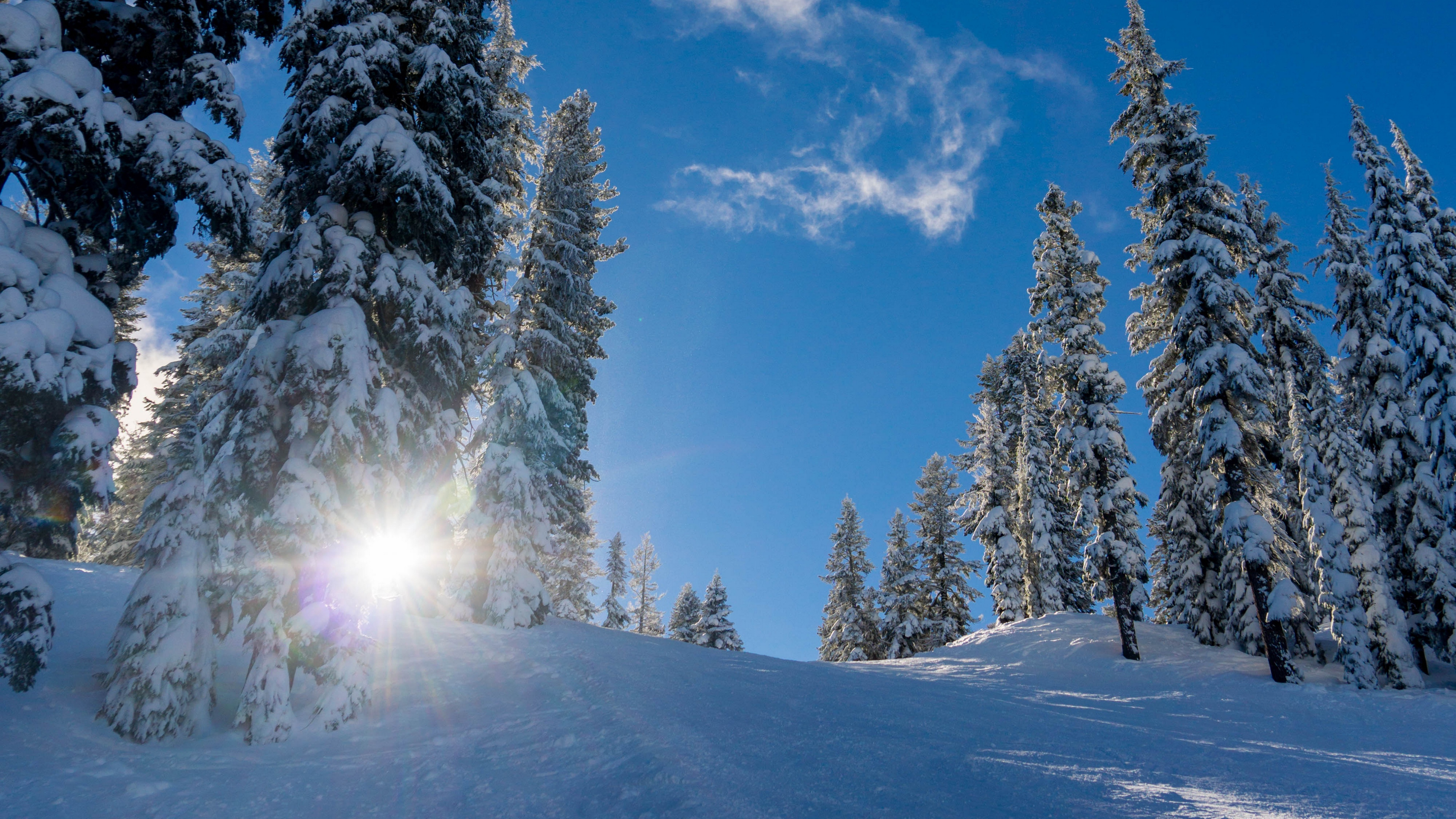 forest winter snow trees sunlight elevation 4k 1541117311 - forest, winter, snow, trees, sunlight, elevation 4k - Winter, Snow, Forest