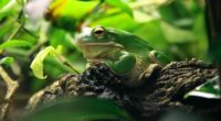 frog leaves shade shelter 4k 1542242579 200x110 - frog, leaves, shade, shelter 4k - Shade, Leaves, Frog