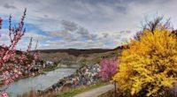 germany river bushes 4k 1541117509 200x110 - germany, river, bushes 4k - River, Germany, bushes