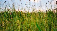 grass field summer green sunny 4k 1541116813 200x110 - grass, field, summer, green, sunny 4k - Summer, Grass, Field