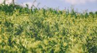 grass green plant blur garden 4k 1541115502 200x110 - grass, green, plant, blur, garden 4k - Plant, green, Grass