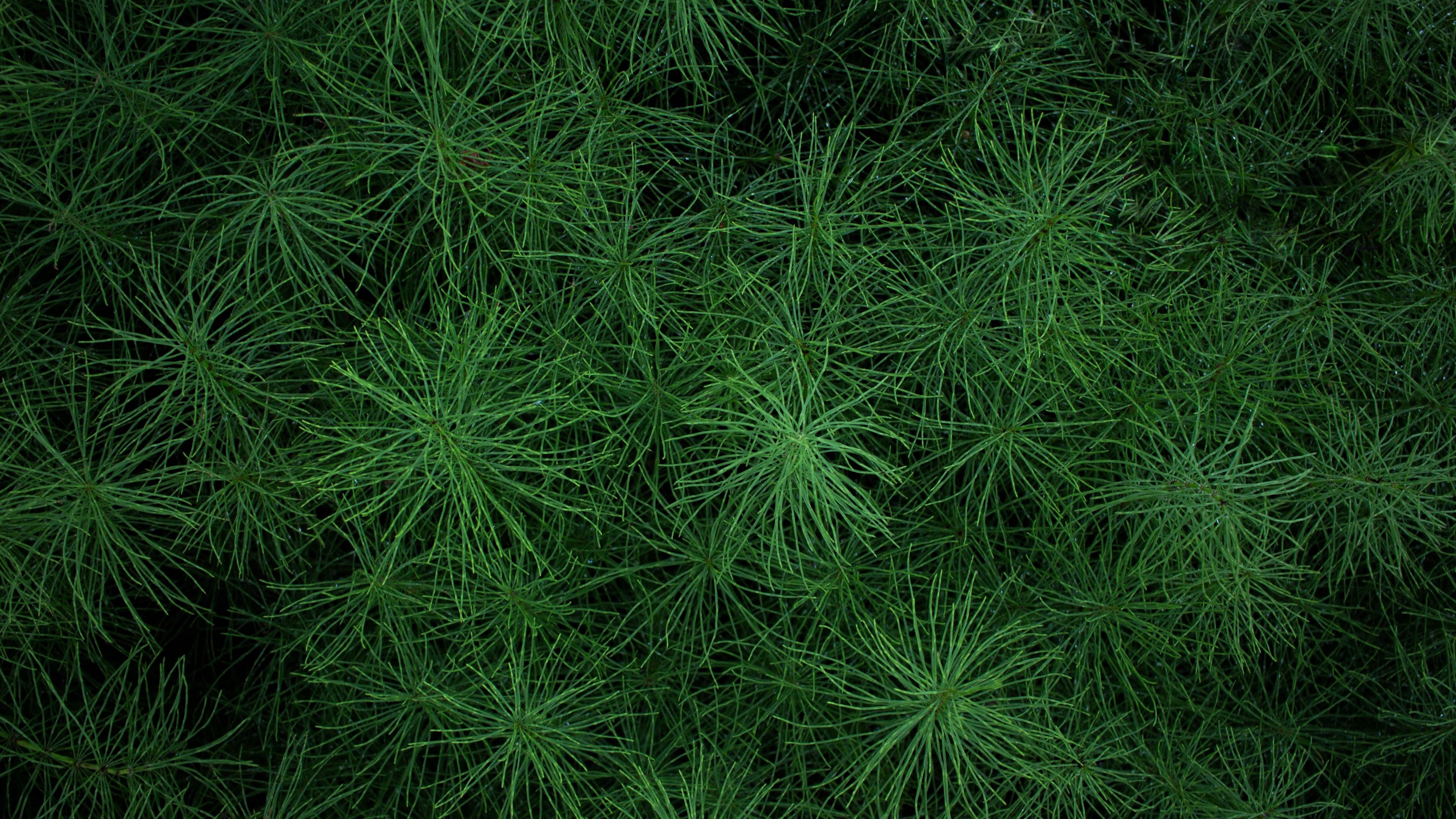 grass greens plant 4k 1541115027 - grass, greens, plant 4k - Plant, greens, Grass