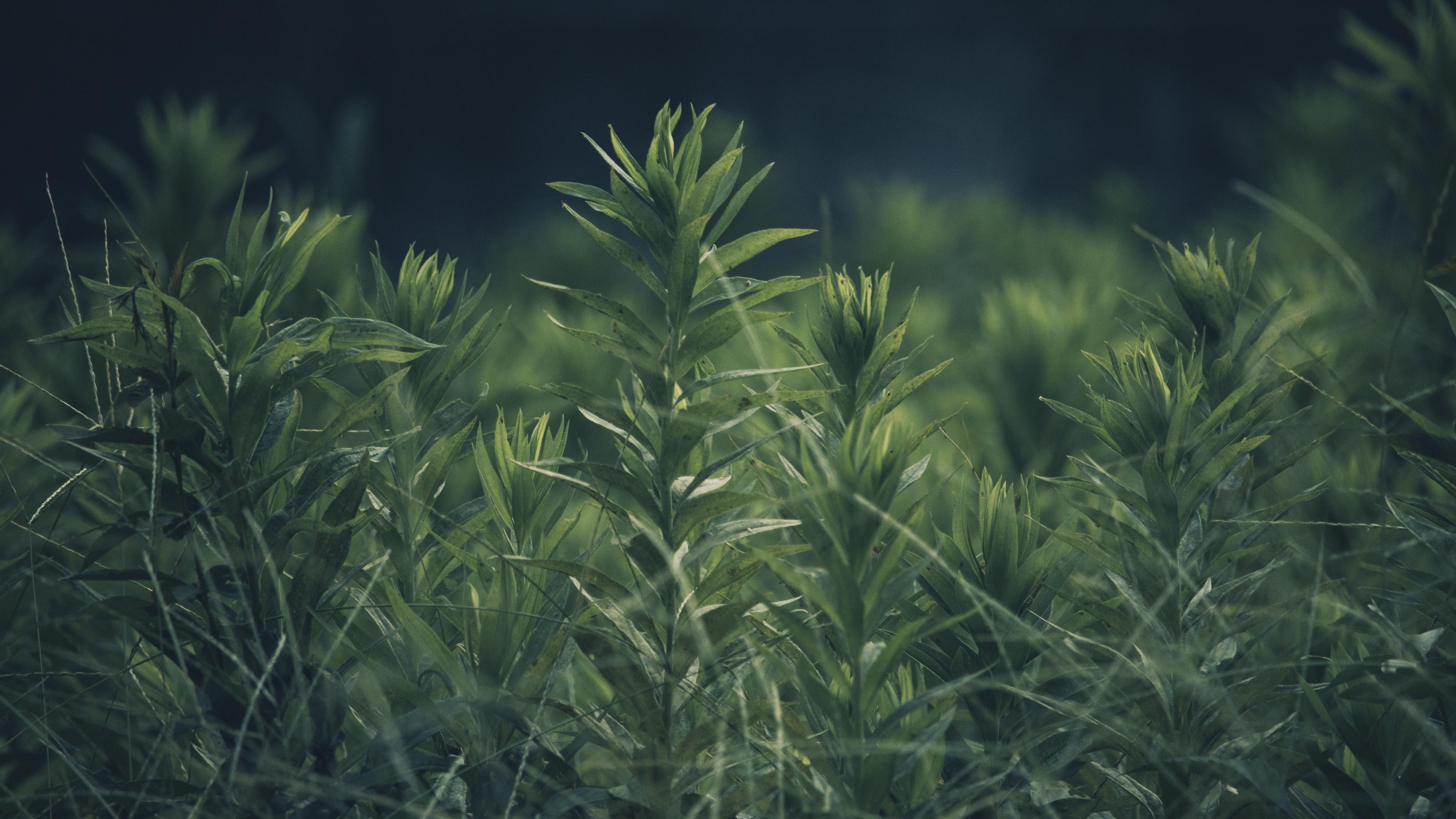 grass plant green blur 4k 1541117182 - grass, plant, green, blur 4k - Plant, green, Grass