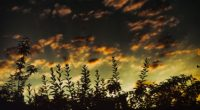 grass sunset clouds dark 4k 1541116652 200x110 - grass, sunset, clouds, dark 4k - sunset, Grass, Clouds