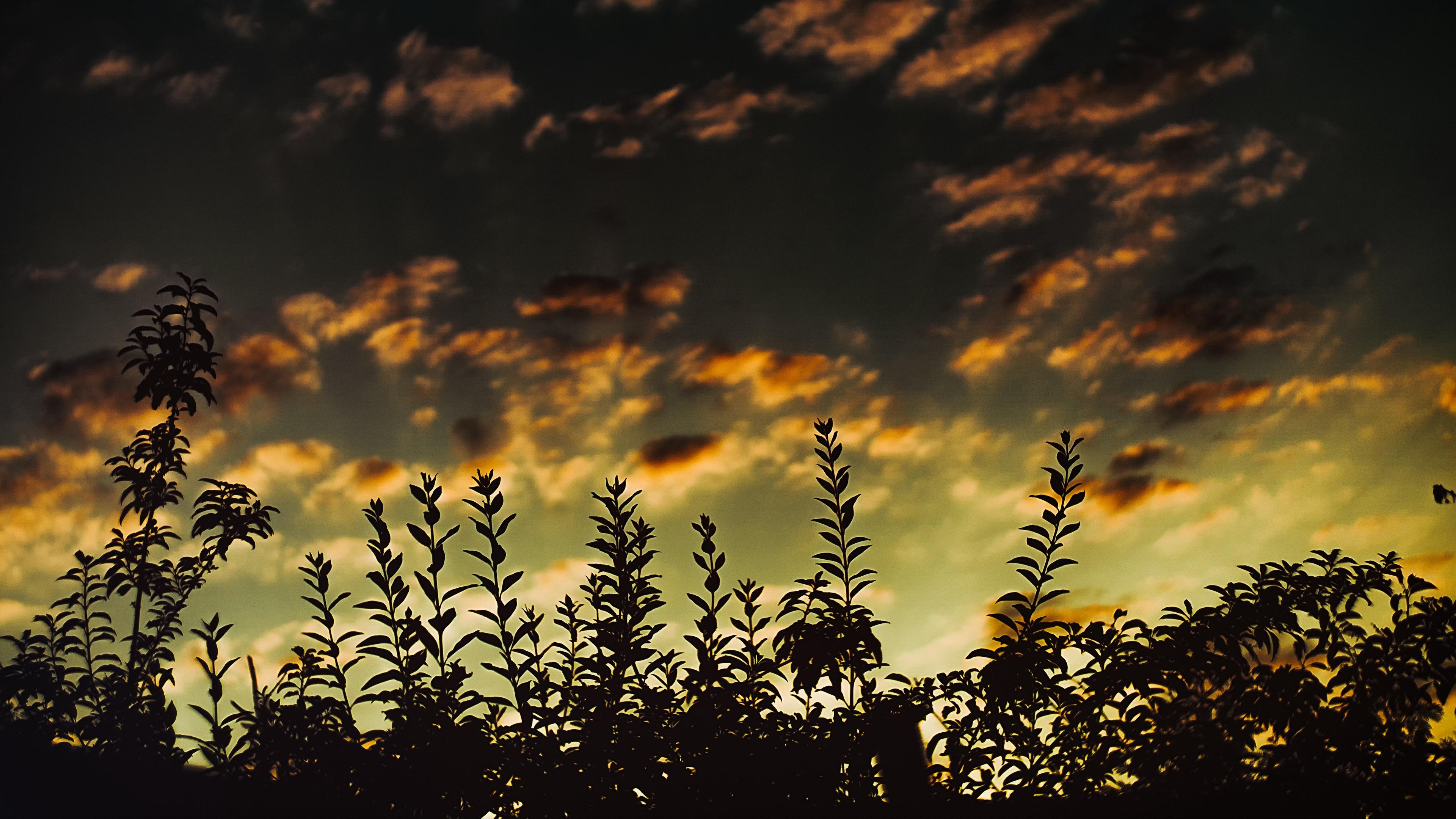 grass sunset clouds dark 4k 1541116652 - grass, sunset, clouds, dark 4k - sunset, Grass, Clouds