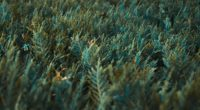grass vegetation green 4k 1541115029 200x110 - grass, vegetation, green 4k - Vegetation, green, Grass