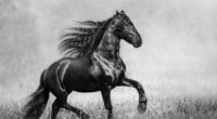 horse black and white 4k 1542238178 200x110 - Horse Black And White 4k - monochrome wallpapers, horse wallpapers, black and white wallpapers, animals wallpapers
