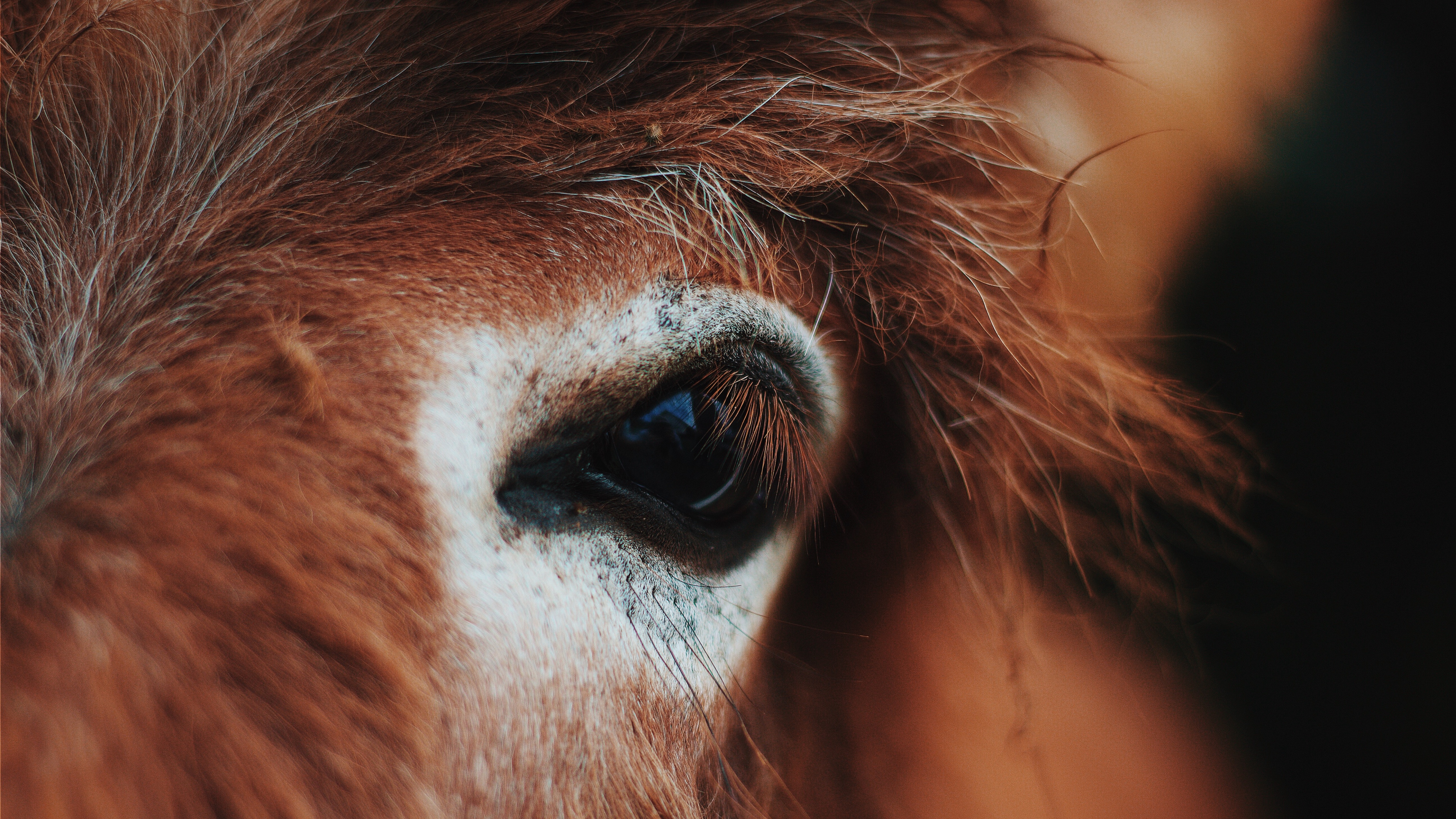 horse eye mane eyelashes 4k 1542243039 - horse, eye, mane, eyelashes 4k - mane, horse, Eye