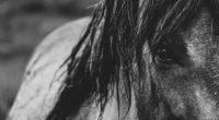 horse eyes mane bw 4k 1542241533 200x110 - horse, eyes, mane, bw 4k - mane, horse, Eyes