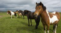 horse herd grass stand 4k 1542241759 200x110 - horse, herd, grass, stand 4k - horse, Herd, Grass