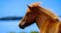 horse in depth of field 4k 1542238314 200x110 - Horse In Depth Of Field 4k - horse wallpapers, hd-wallpapers, animals wallpapers, 5k wallpapers, 4k-wallpapers