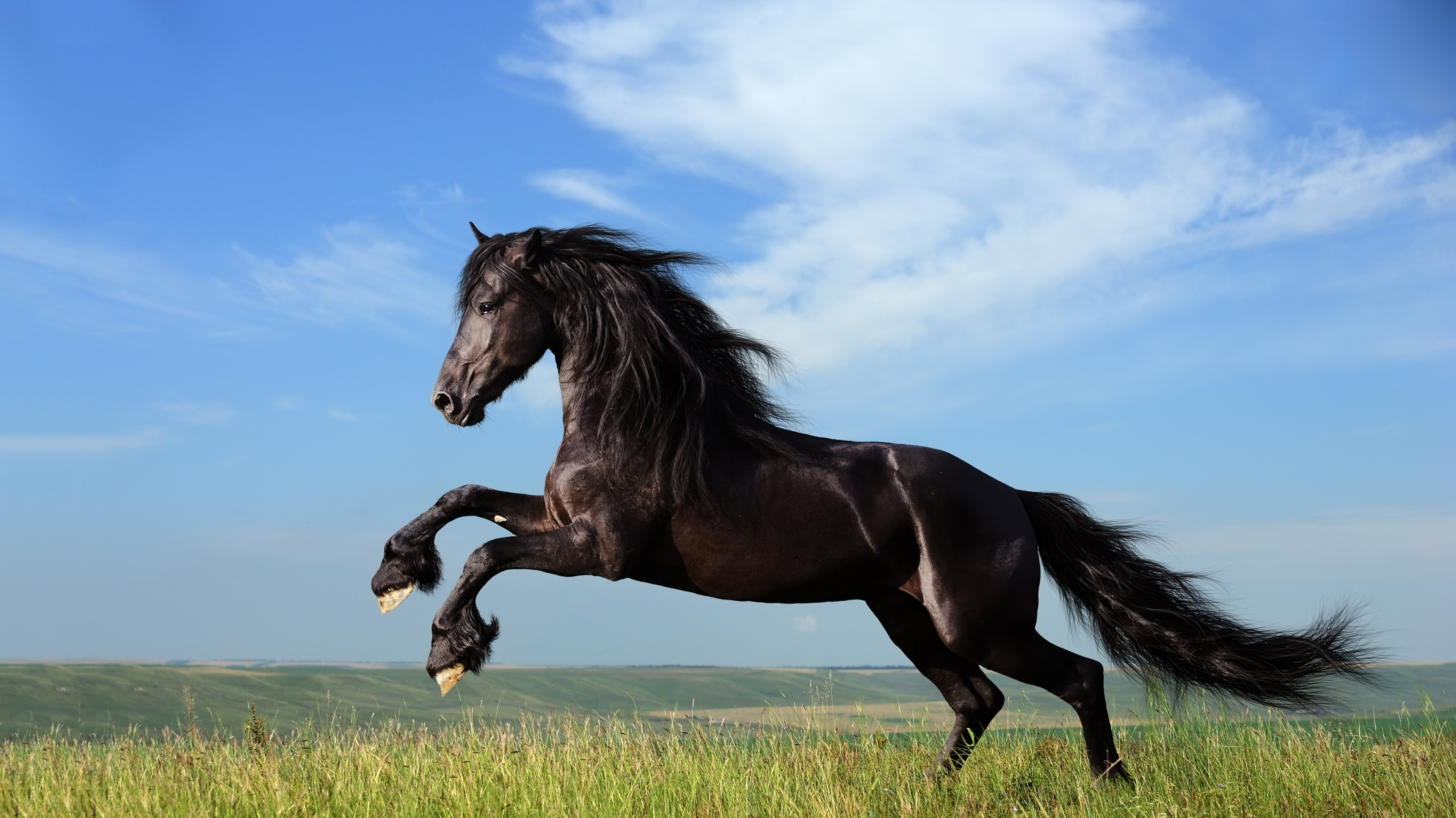 horse jump 4k 1542237857 - Horse Jump 4k - jump wallpapers, horse wallpapers, black wallpapers, animals wallpapers