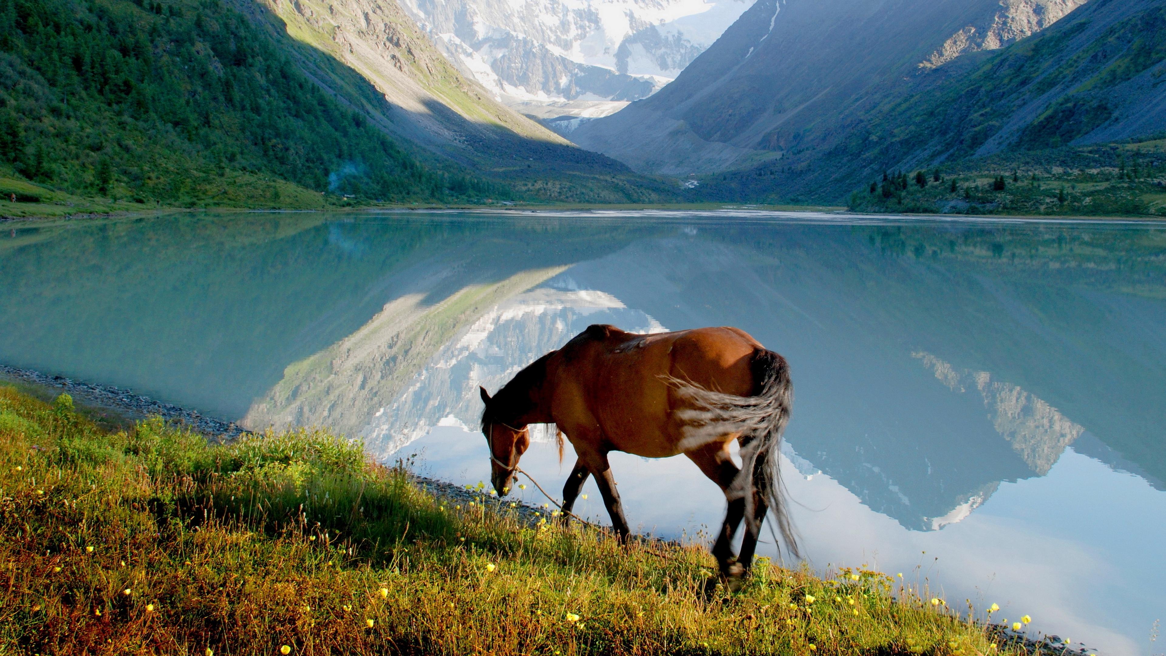 horse mountain lake grass walk 4k 1542242813 - horse, mountain, lake, grass, walk 4k - Mountain, Lake, horse