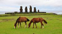 horse statues grass field food 4k 1542242688 200x110 - horse, statues, grass, field, food 4k - statues, horse, Grass