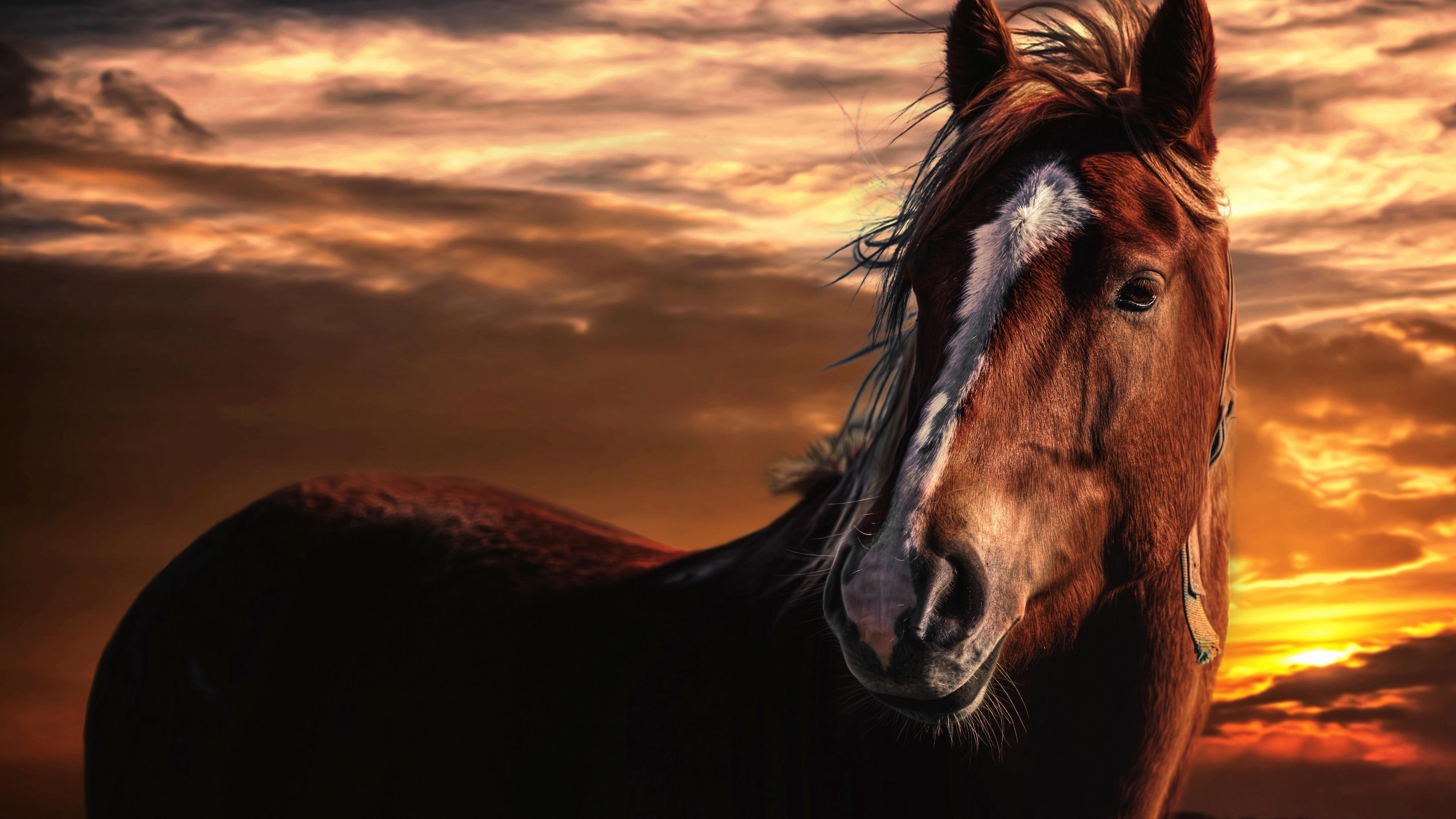 horse sunset mane sky wind 4k 1542242674 - horse, sunset, mane, sky, wind 4k - sunset, mane, horse