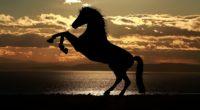 horse sunset sea light reflections 4k 1542238858 200x110 - Horse Sunset Sea Light Reflections 4k - silhouette wallpapers, sea wallpapers, reflections wallpapers, horse wallpapers, hd-wallpapers, animals wallpapers, 4k-wallpapers
