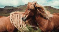 horses 4k 1542239369 200x110 - Horses 4k - horses wallpapers, horse wallpapers, hd-wallpapers, animals wallpapers, 4k-wallpapers