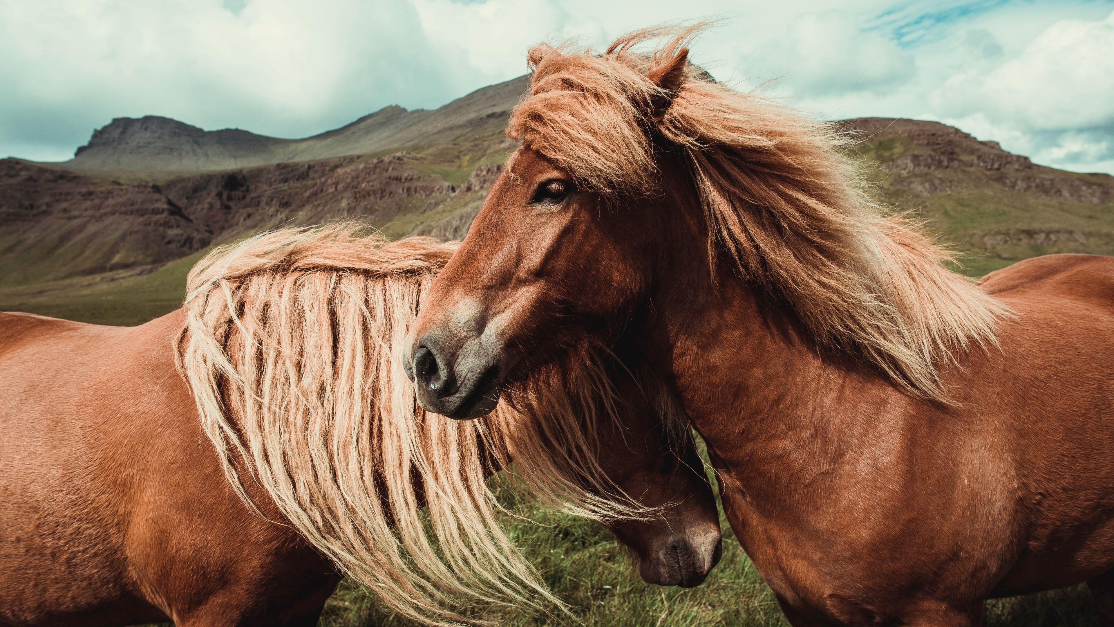 horses 4k 1542239369 - Horses 4k - horses wallpapers, horse wallpapers, hd-wallpapers, animals wallpapers, 4k-wallpapers