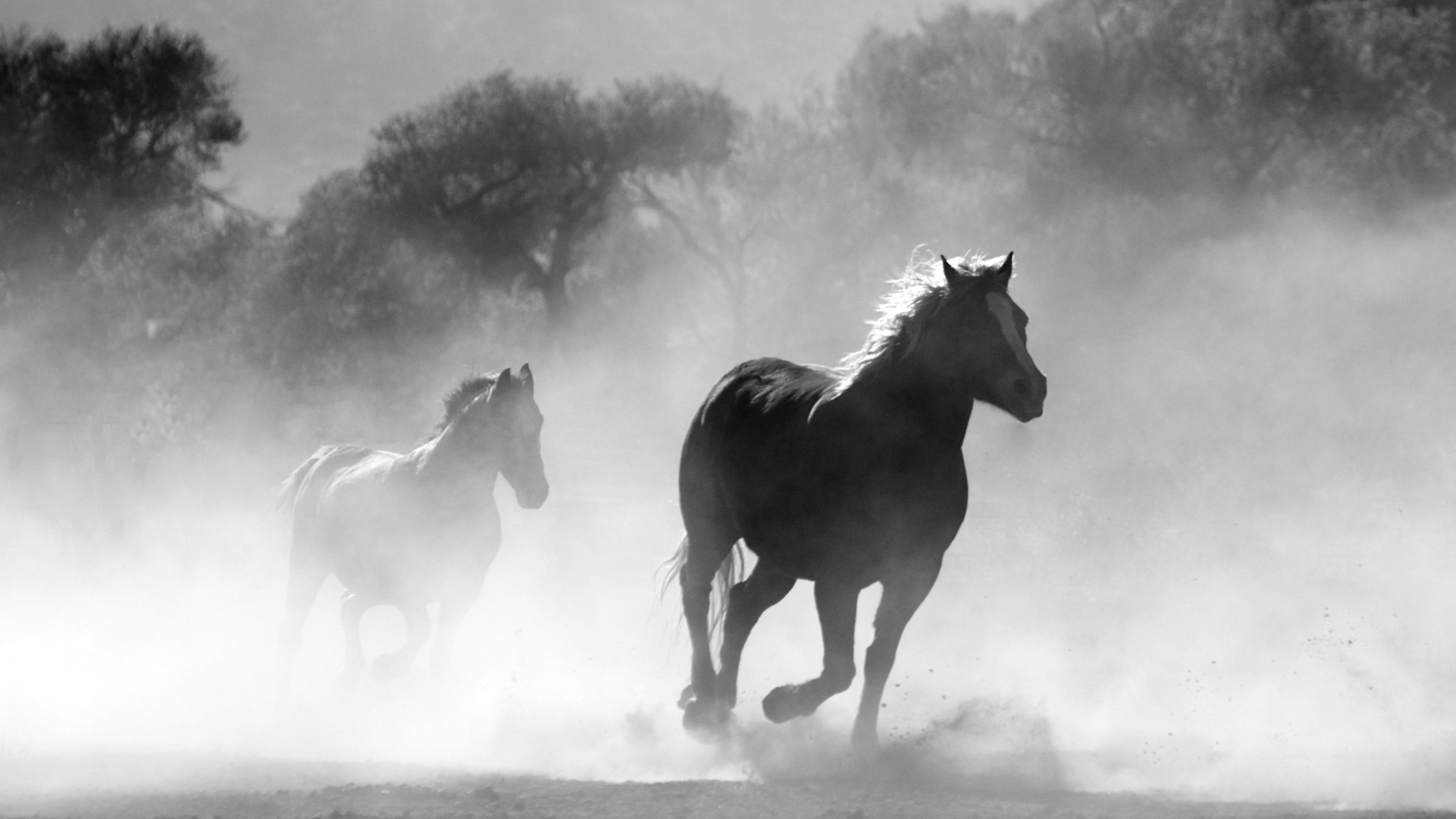Wallpaper 4k Horses Running Dust Monochrome 4k 4k Wallpapers