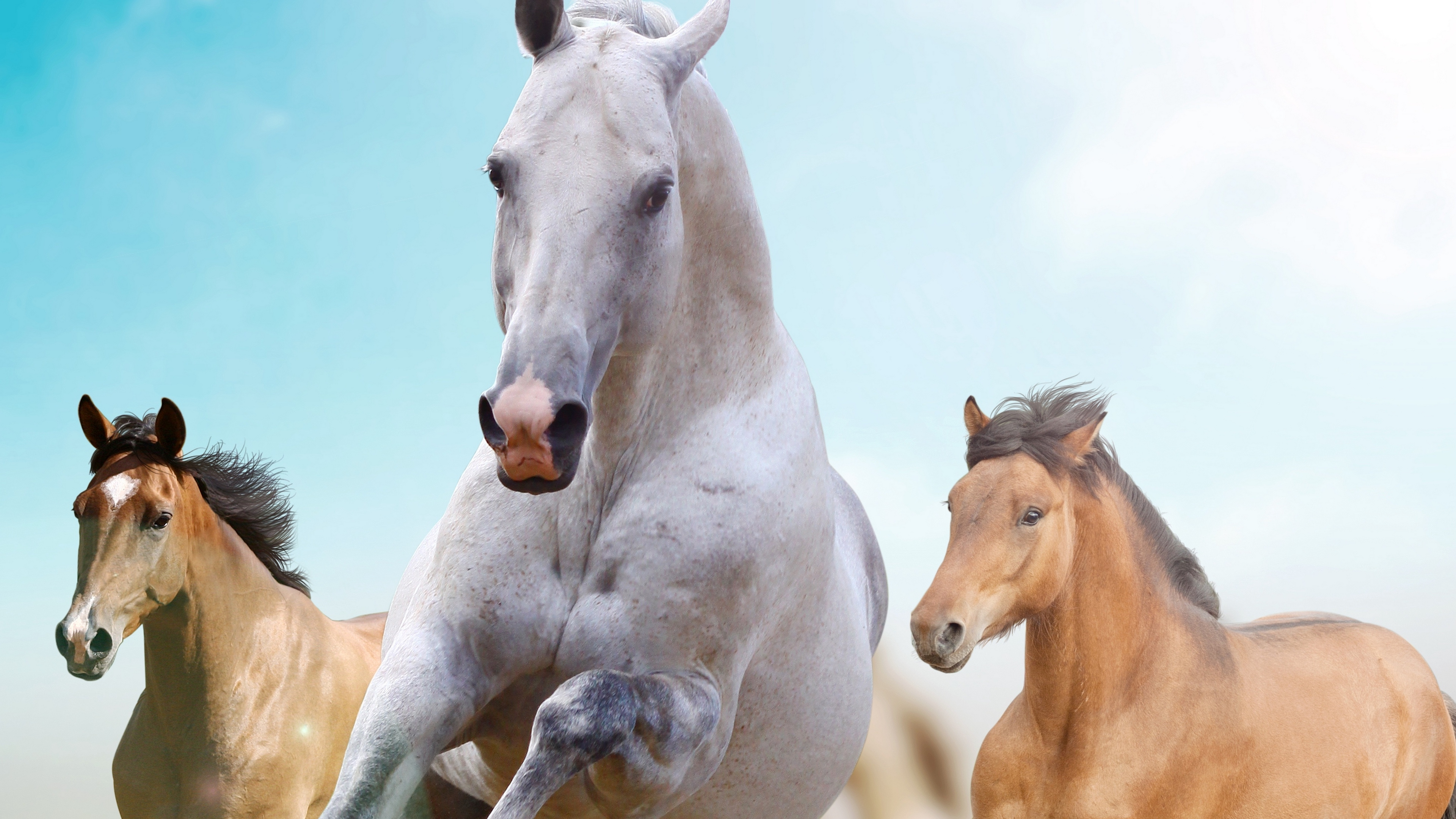 horses running freedom 4k 1542242249 - horses, running, freedom 4k - Running, Horses, Freedom
