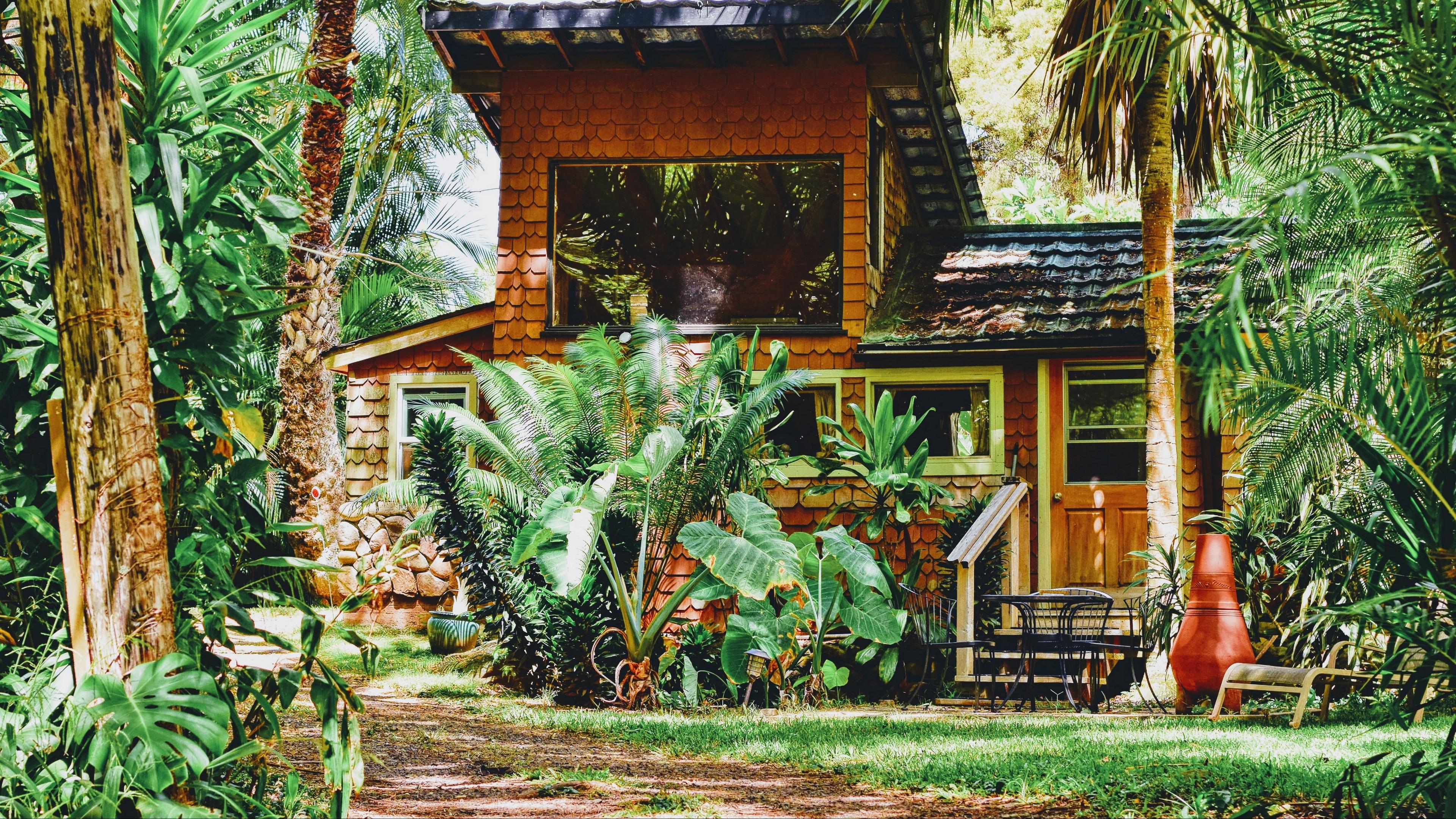 house palm tree plants sunlight 4k 1541114088 - house, palm tree, plants, sunlight 4k - plants, palm tree, House