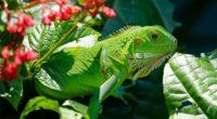 iguana reptile lizard flower leaf 4k 1542242255 200x110 - iguana, reptile, lizard, flower, leaf 4k - reptile, Lizard, iguana