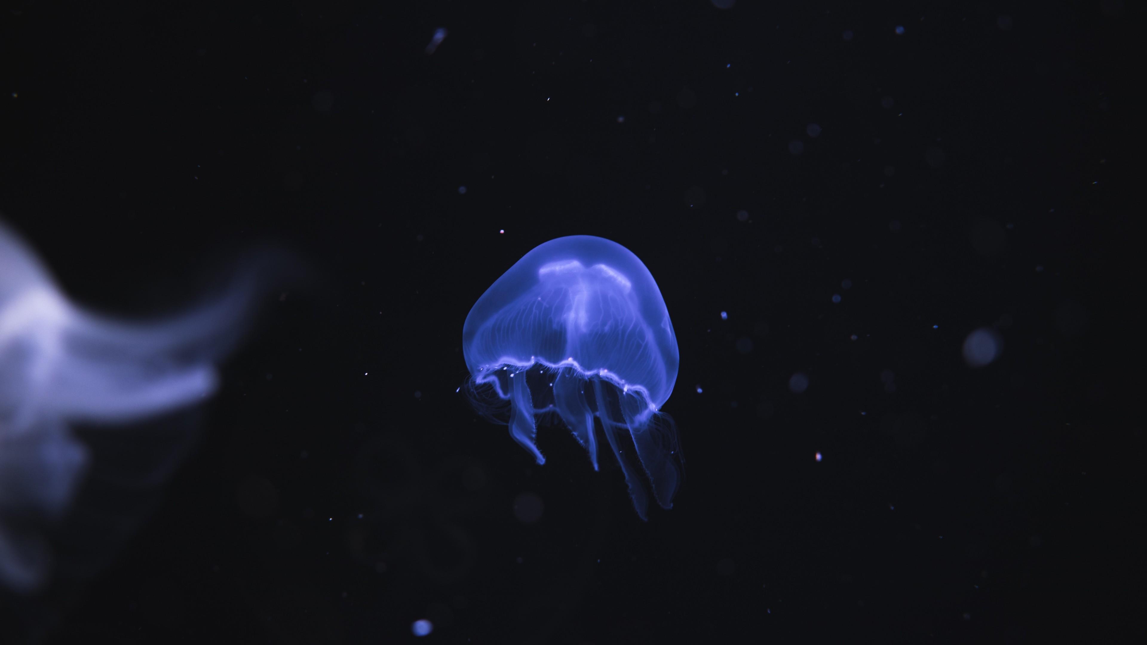 jellyfish underwater 4k 1542239114 - Jellyfish Underwater 4k - underwater wallpapers, jellyfish wallpapers, hd-wallpapers, animals wallpapers, 4k-wallpapers