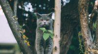 kitten british cat leaves 4k 1542242014 200x110 - kitten, british, cat, leaves 4k - Kitten, Cat, British
