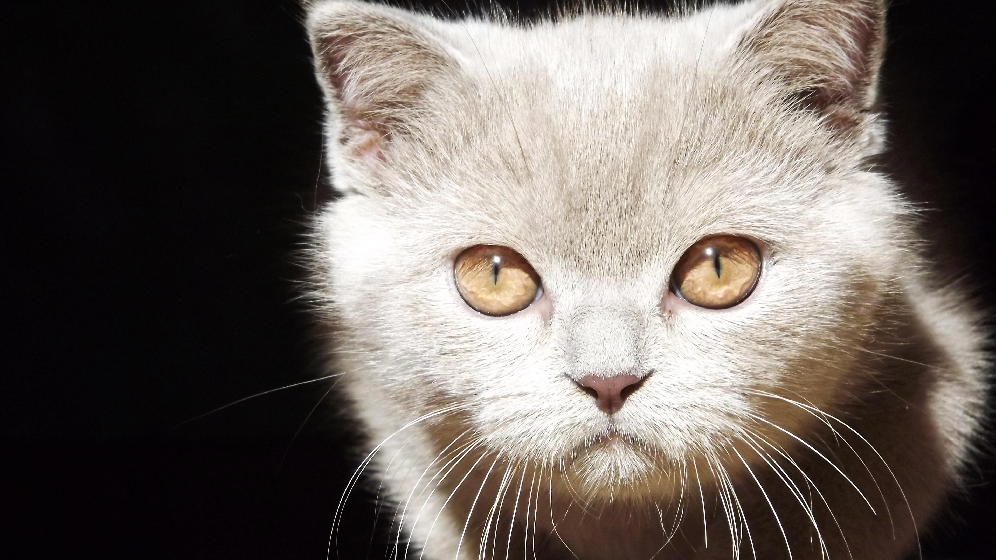 kitten face eyes background 4k 1542241553 - kitten, face, eyes, background 4k - Kitten, Face, Eyes