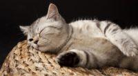 kitten sleeping striped lie 4k 1542242632 200x110 - kitten, sleeping, striped, lie 4k - striped, Sleeping, Kitten