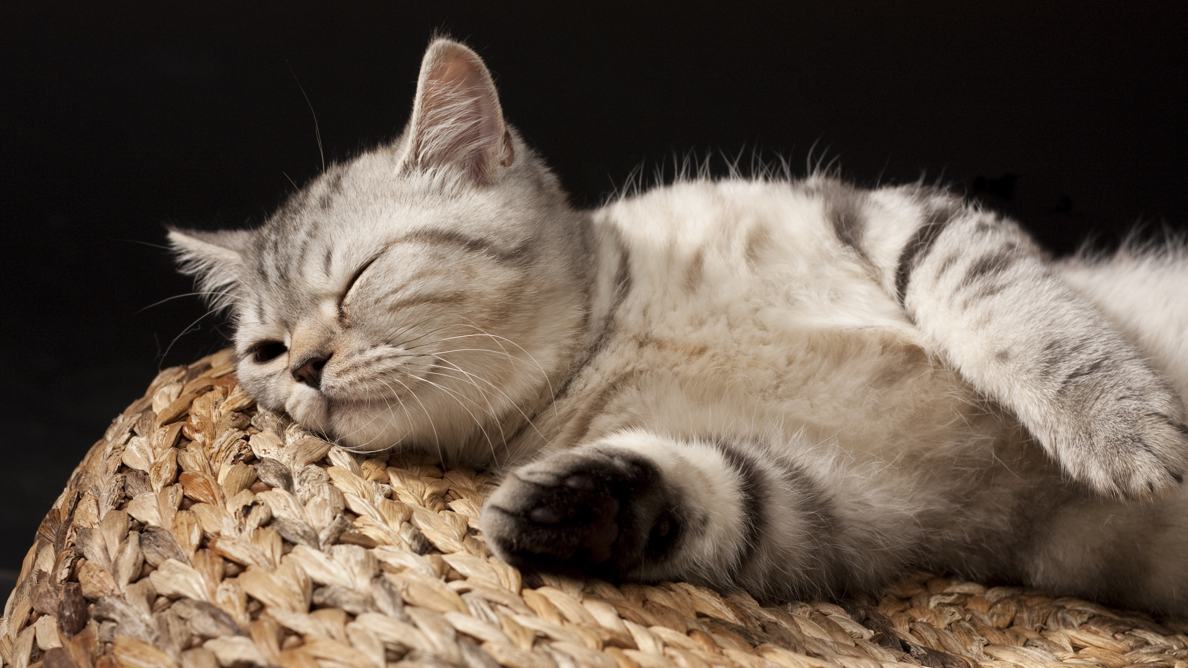kitten sleeping striped lie 4k 1542242632 - kitten, sleeping, striped, lie 4k - striped, Sleeping, Kitten
