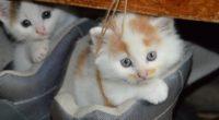 kittens cats copuple 4k 1542237713 200x110 - Kittens Cats Copuple 4k - kitten wallpapers, cute wallpapers, couple wallpapers, animals wallpapers