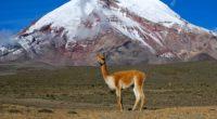 lama mountain grass stand top 4k 1542242883 200x110 - lama, mountain, grass, stand, top 4k - Mountain, lama, Grass