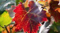 leaf autumn vines branches 4k 1541117875 200x110 - leaf, autumn, vines, branches 4k - vines, leaf, Autumn