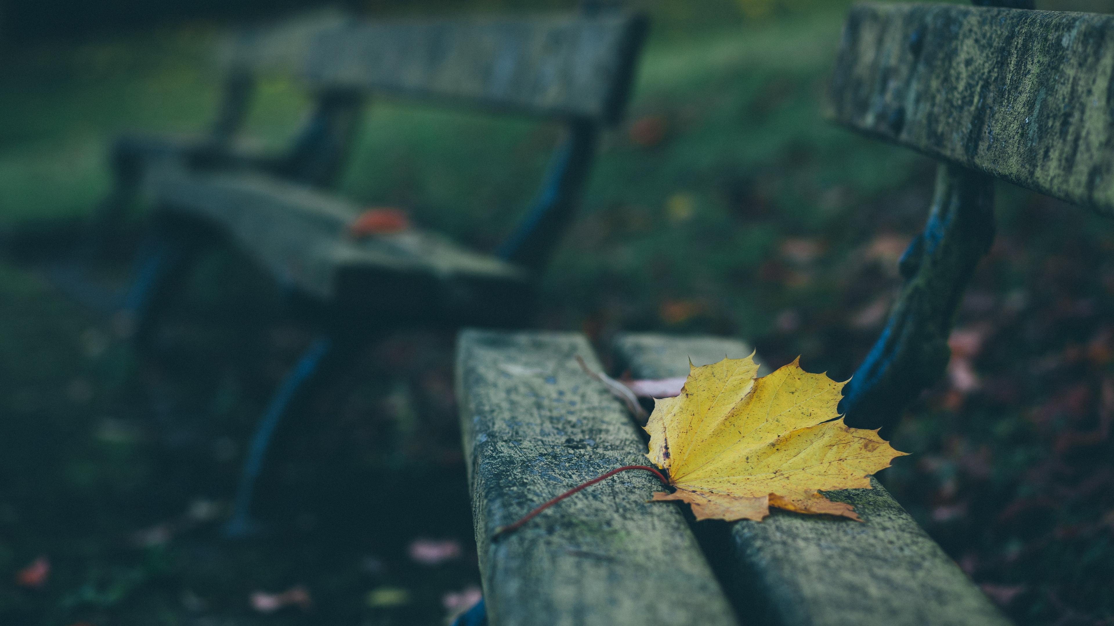 leaves autumn bench 4k 1541116271 - leaves, autumn, bench 4k - Leaves, Bench, Autumn