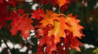leaves autumn red october 4k 1541116057 200x110 - leaves, autumn, red, october 4k - red, Leaves, Autumn