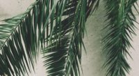 leaves palm branches wall 4k 1541116806 200x110 - leaves, palm, branches, wall 4k - Palm, Leaves, branches