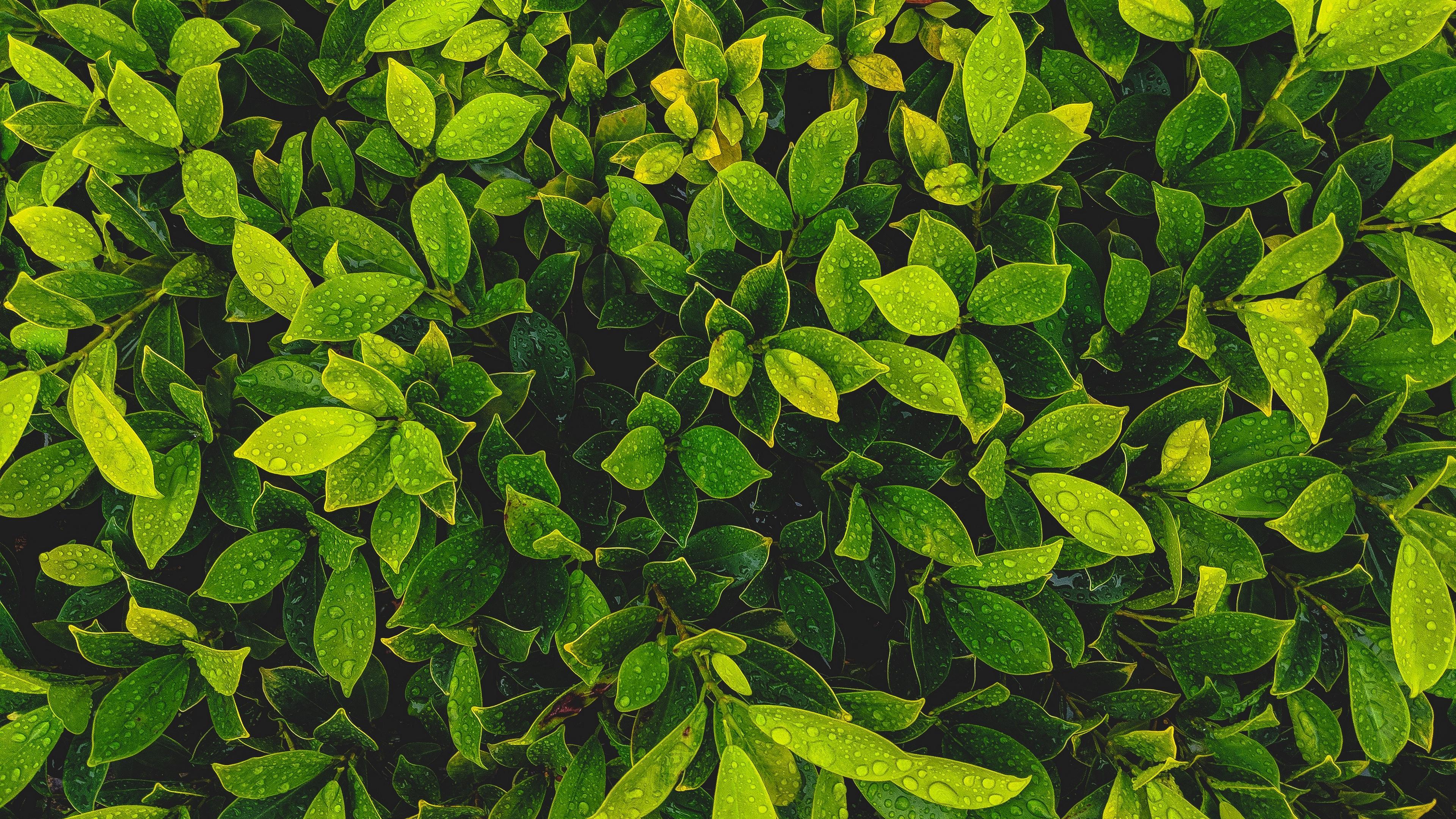 leaves plant drops green 4k 1541115412 - leaves, plant, drops, green 4k - Plant, Leaves, Drops