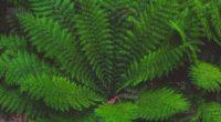 leaves plant green 4k 1541117407 200x110 - leaves, plant, green 4k - Plant, Leaves, green